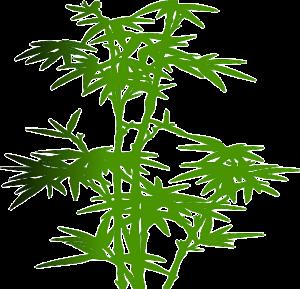 Bambussocken werden nicht aus dem schnell wachsenden Rohstoff hergestellt